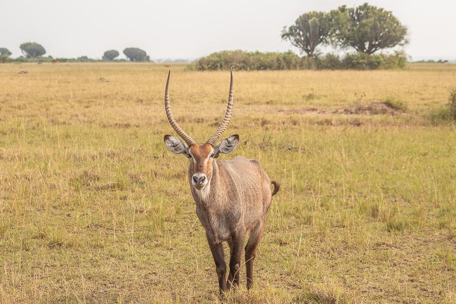 parque-nacional-queen-elisabeth-safari-uganda-23