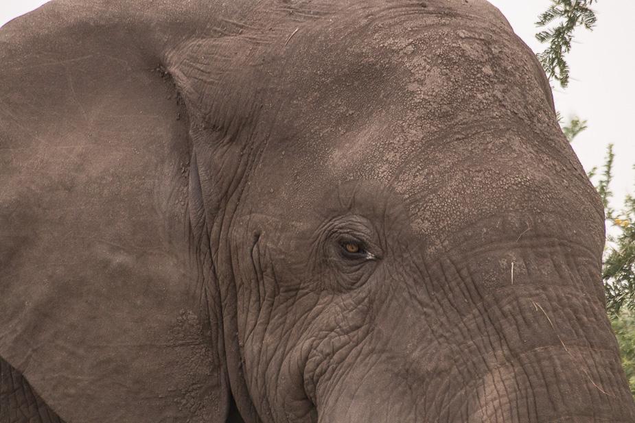 parque-nacional-queen-elisabeth-safari-uganda-3