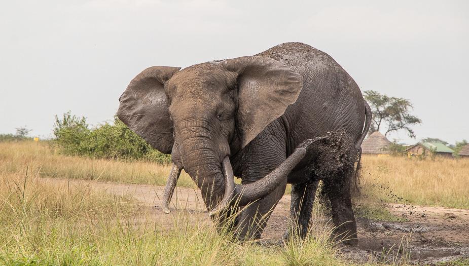 parque-nacional-queen-elisabeth-safari-uganda-30