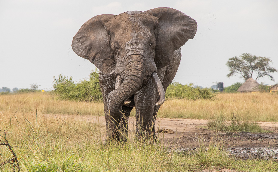parque-nacional-queen-elisabeth-safari-uganda-32