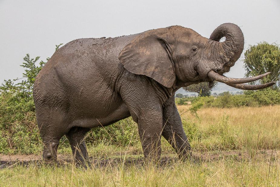 parque-nacional-queen-elisabeth-safari-uganda-33