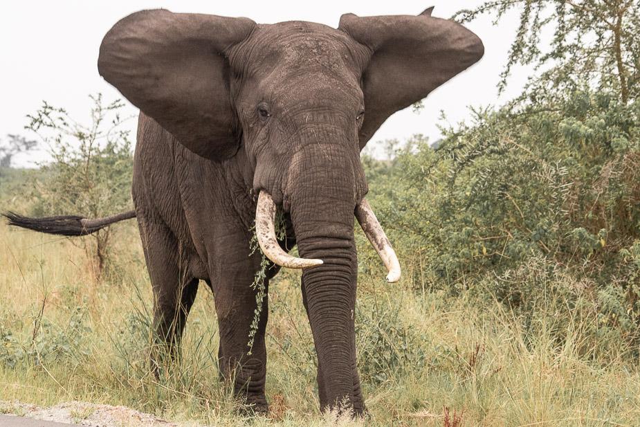 parque-nacional-queen-elisabeth-safari-uganda-6
