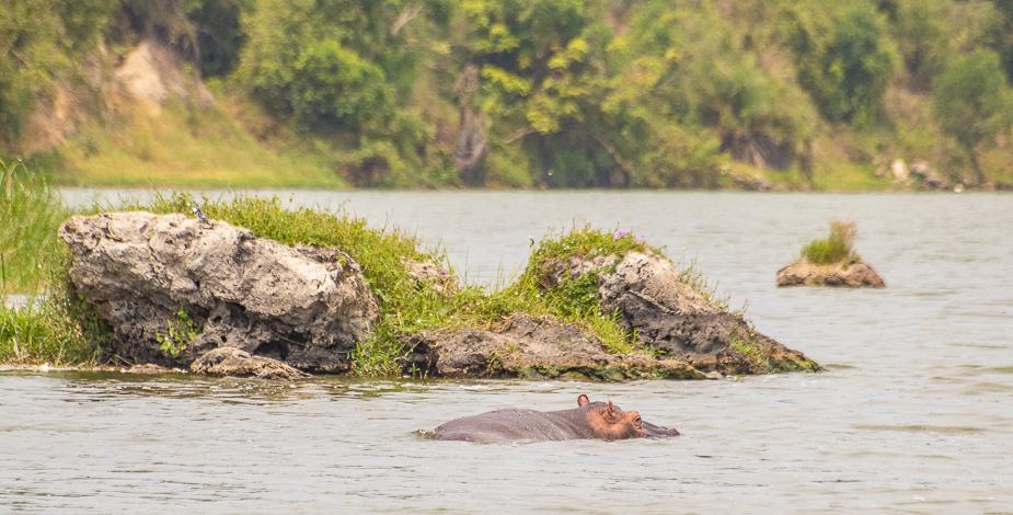 safari-en-barca-canal-de-kazinga-uganda-20