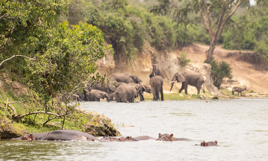 safari-en-barca-canal-de-kazinga-uganda-21