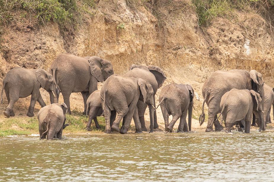 safari-en-barca-canal-de-kazinga-uganda-27