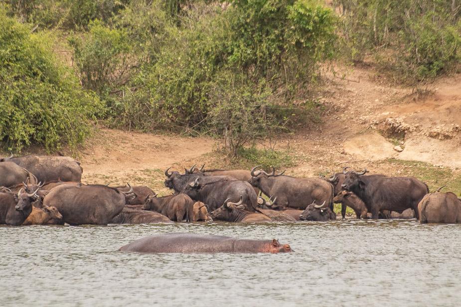 safari-en-barca-canal-de-kazinga-uganda-30