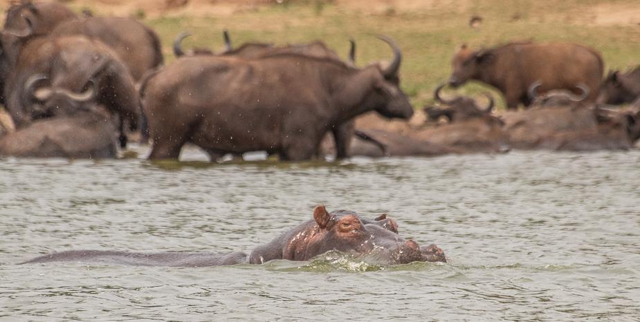 safari-en-barca-canal-de-kazinga-uganda-34