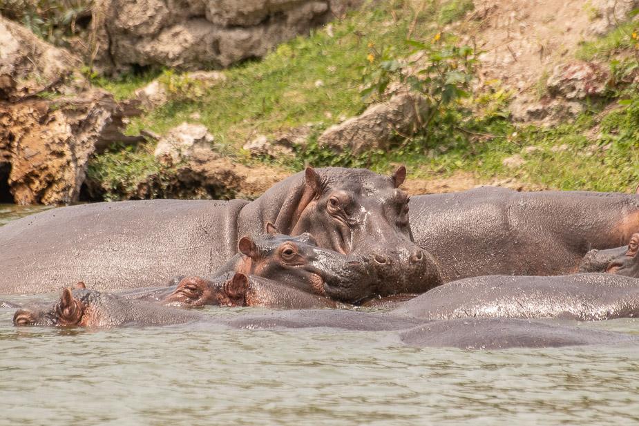 safari-en-barca-canal-de-kazinga-uganda-44-1