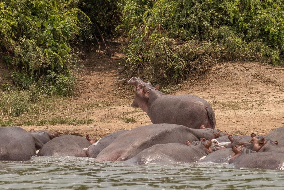 safari-en-barca-canal-de-kazinga-uganda-46