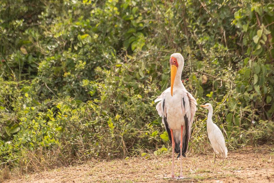 safari-en-barca-canal-de-kazinga-uganda-7safari-en-barca-canal-de-kazinga-uganda-7