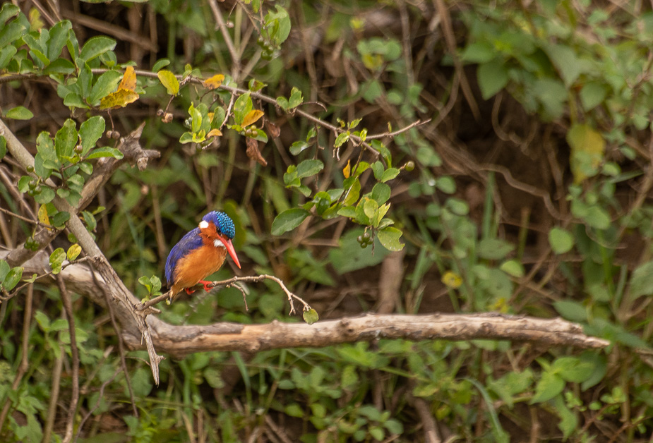 safari-en-barca-canal-de-kazinga-uganda-9
