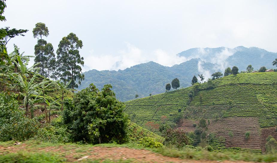 acceso-a-parque-nacional-bosque-impenetrable-bwindi-uganda-5