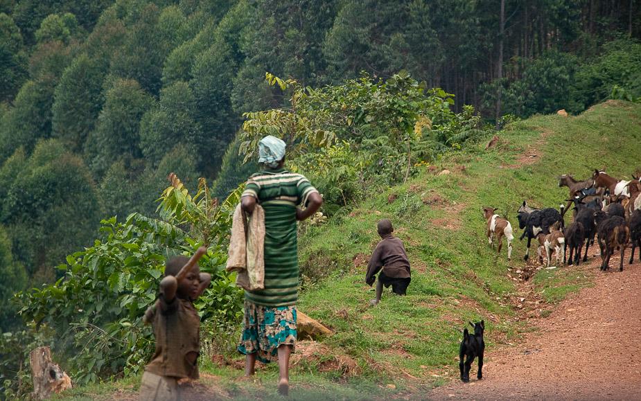 acceso-a-parque-nacional-bosque-impenetrable-bwindi-uganda-7
