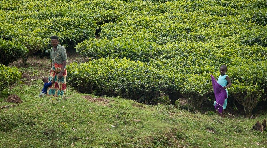 acceso-a-parque-nacional-bosque-impenetrable-bwindi-uganda-8