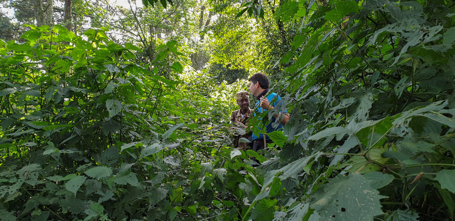 camino-bosque-impenetrable-bwindi-trekking-1