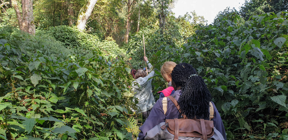 camino-bosque-impenetrable-bwindi-trekking-2