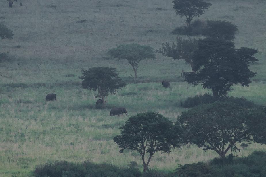 ishasha-parque-nacional-queen-elisabeth-uganda-1