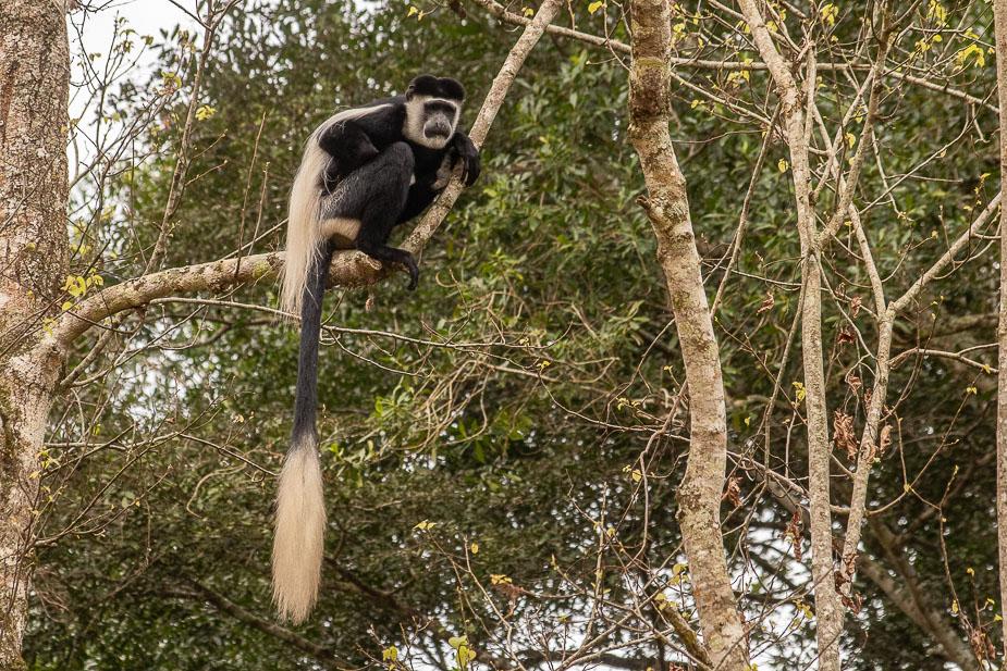 ishasha-parque-nacional-queen-elisabeth-uganda-12