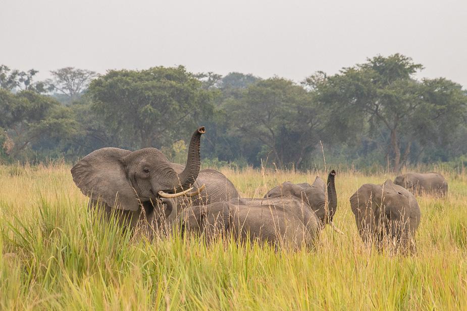ishasha-parque-nacional-queen-elisabeth-uganda-13