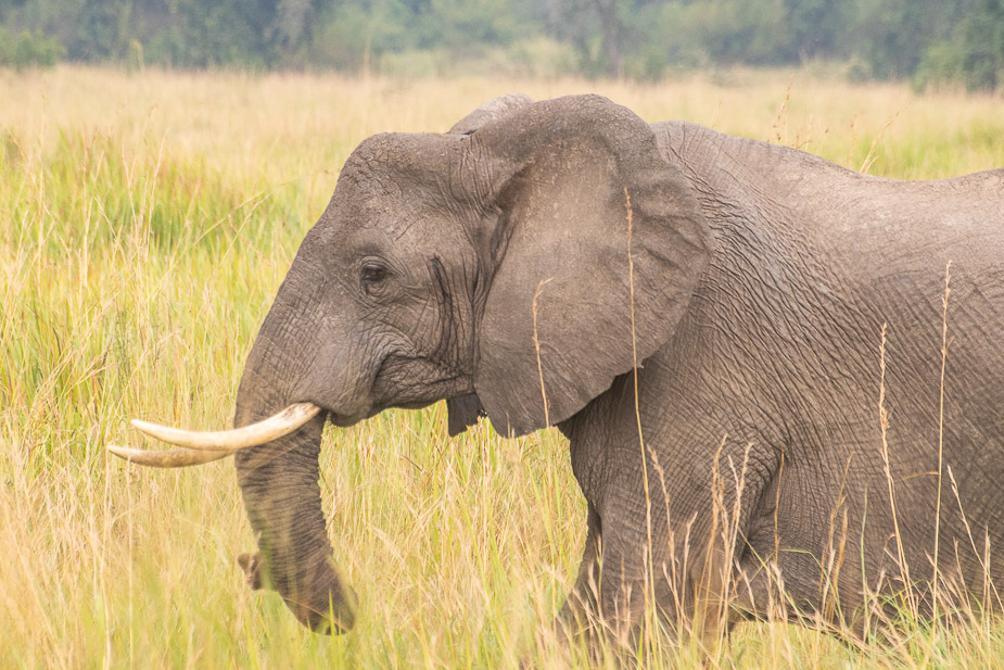ishasha-parque-nacional-queen-elisabeth-uganda-14