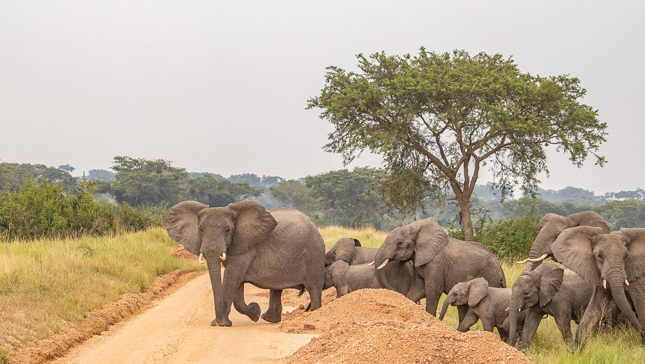 ishasha-parque-nacional-queen-elisabeth-uganda-15
