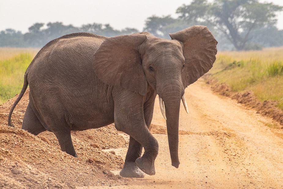 ishasha-parque-nacional-queen-elisabeth-uganda-20