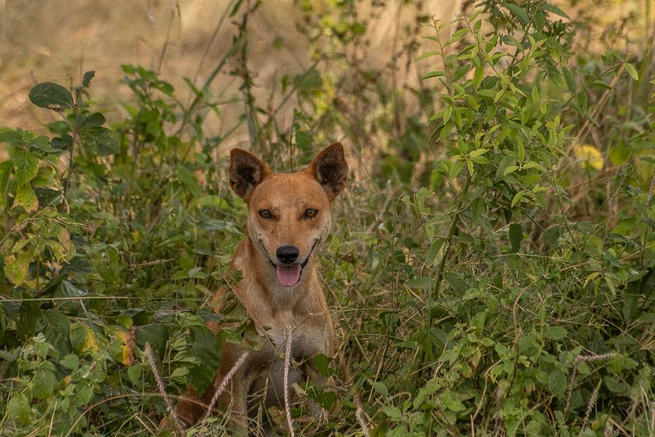 ishasha parque nacional queen elisabeth uganda (31)