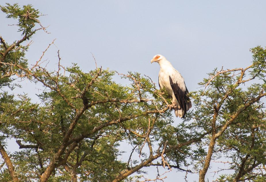 ishasha-parque-nacional-queen-elisabeth-uganda-3
