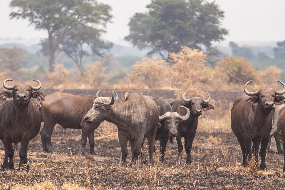 ishasha-parque-nacional-queen-elisabeth-uganda-36