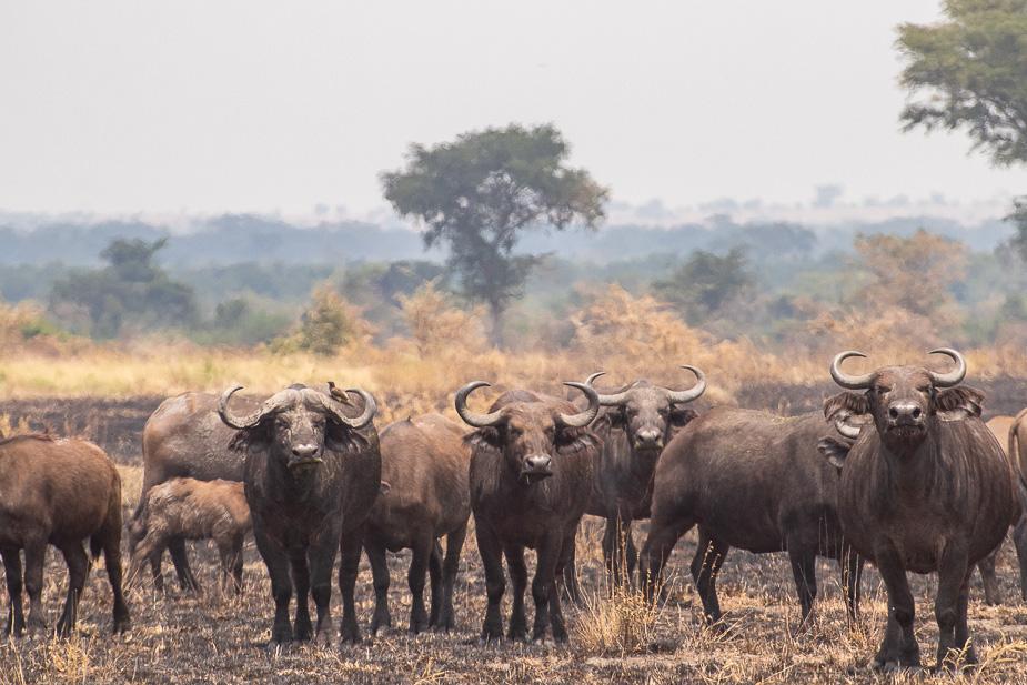 ishasha-parque-nacional-queen-elisabeth-uganda-37