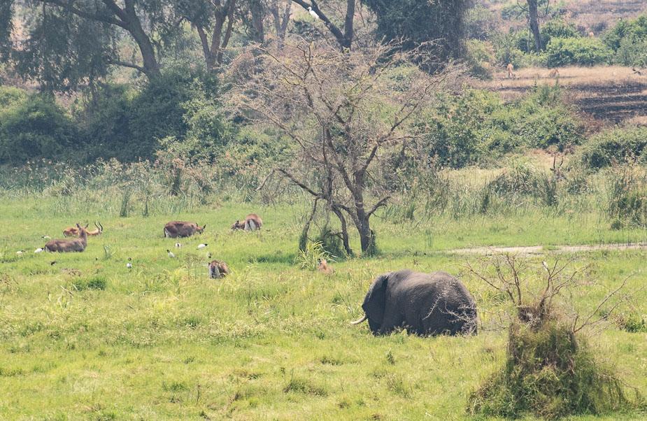 ishasha-parque-nacional-queen-elisabeth-uganda-38