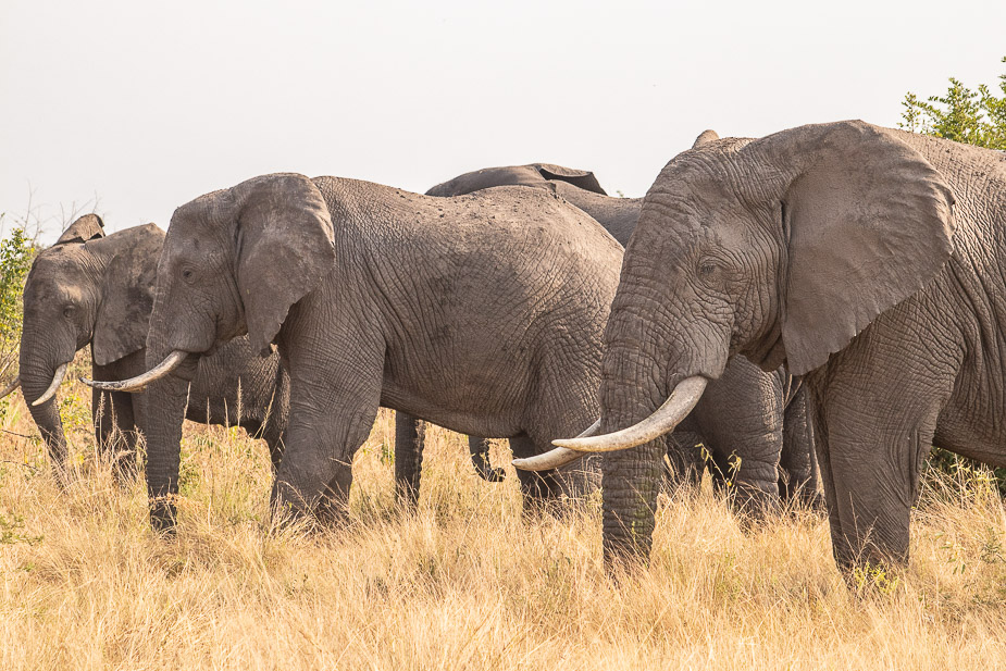 ishasha-parque-nacional-queen-elisabeth-uganda-53