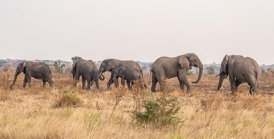ishasha-parque-nacional-queen-elisabeth-uganda-56