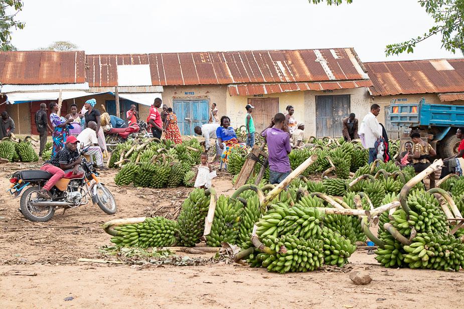 kihihi-uganda-camino-a-bwindi-16