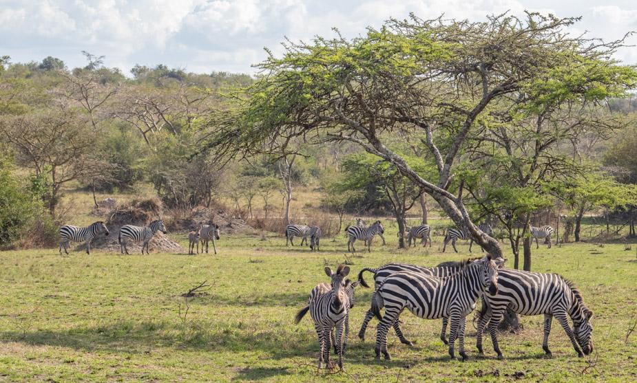 lago-mburo-uganda-18