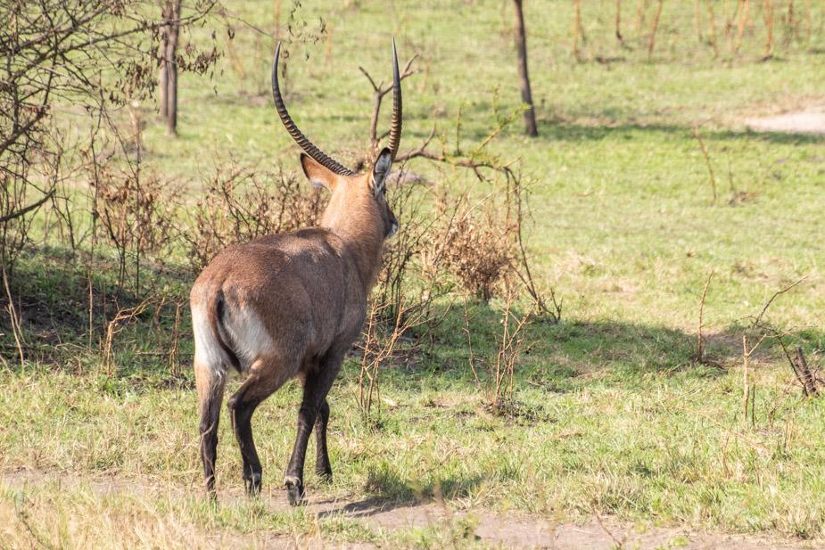 lago-mburo-uganda-19