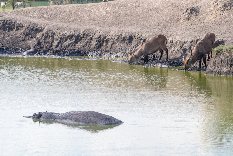 lago-mburo-uganda-22