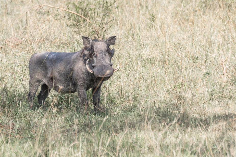 lago-mburo-uganda-7