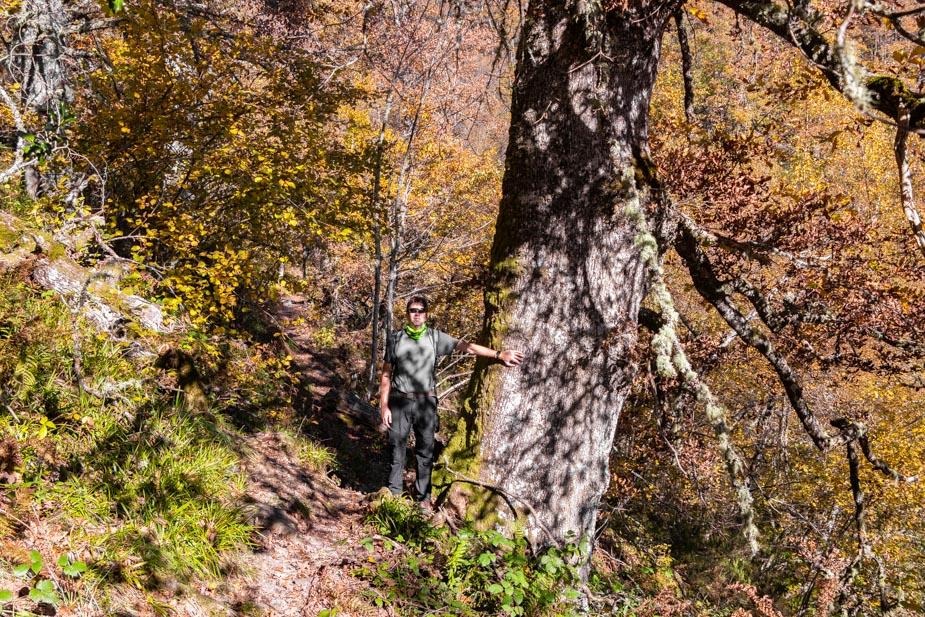reserva-natural-de-muniellos-asturias-13