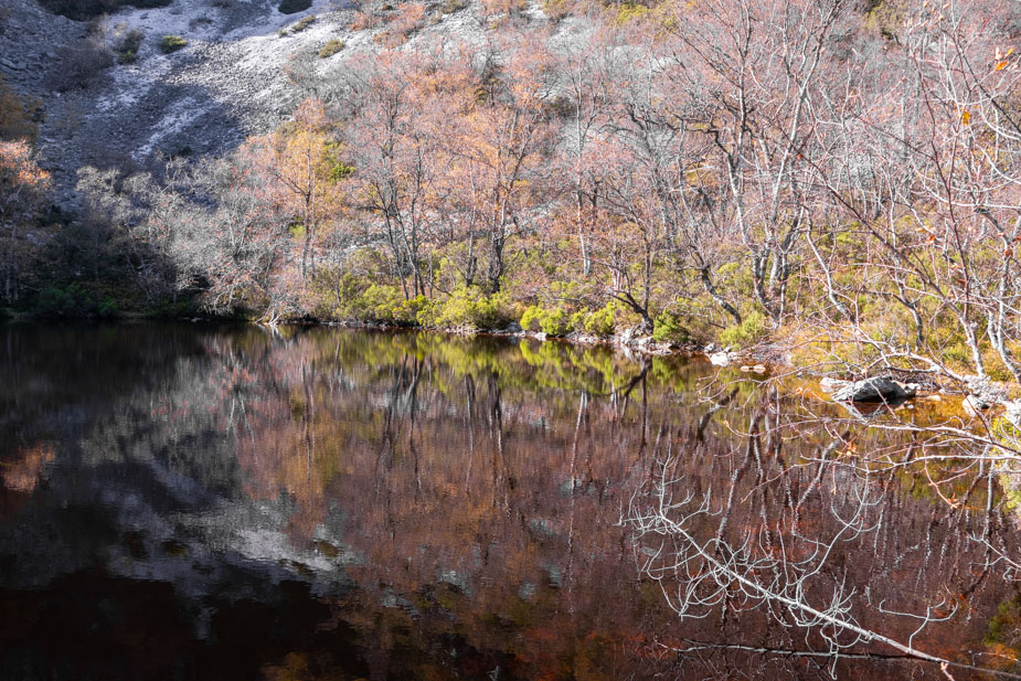 reserva-natural-de-muniellos-asturias-17