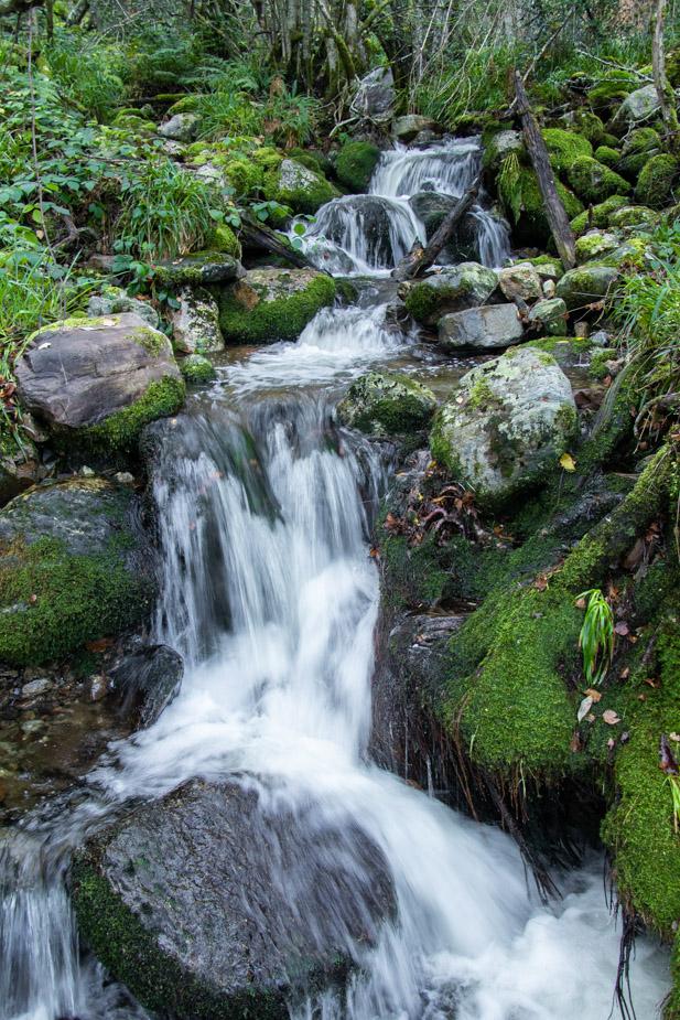 reserva-natural-de-muniellos-asturias-22