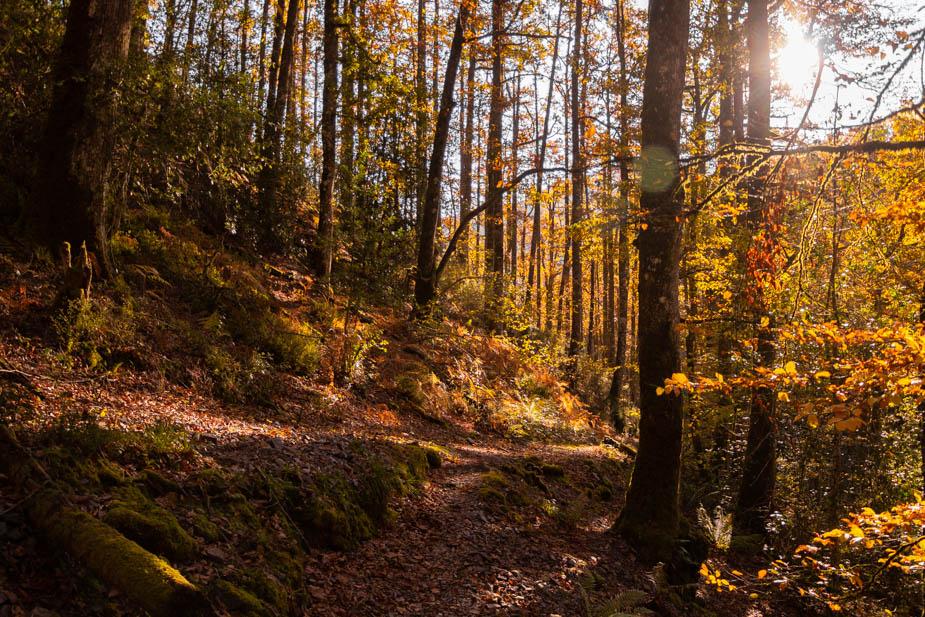 reserva-natural-de-muniellos-asturias-4