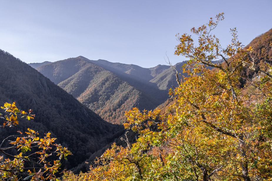 reserva-natural-de-muniellos-asturias-6